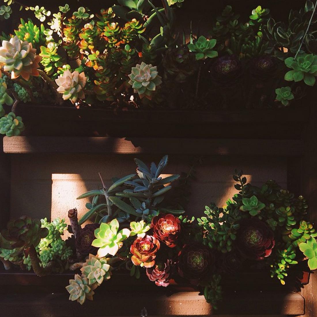 aboutsucculents